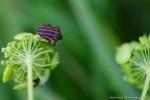 AF-insecte (2)