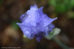 1-AR_FleursPrintemps