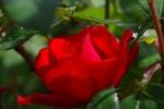 10-OA_FleursPrintemps