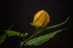 11-JMR_FleursPrintemps