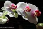 12-FP_FleursPrintemps