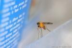 piège à moustique (2)